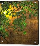 The Little Sparrow In The Tree Acrylic Print
