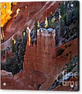 The Lonely One Acrylic Print