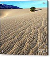 The Magic Of Sand Acrylic Print