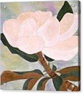The Magnolia Acrylic Print