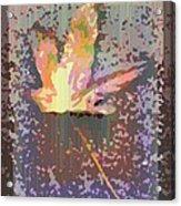 The Maple 6 Acrylic Print