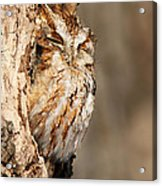 The Master Of Camouflage Acrylic Print