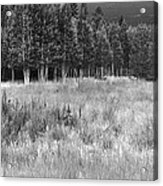 The Meadow Black And White Acrylic Print