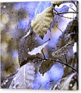 The Melody Of The Silver Rain Acrylic Print