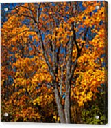 The Moment Of Glory Acrylic Print