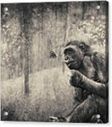 The Monkey And Butterfly Acrylic Print