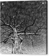 The Moon Tree Acrylic Print by Artist Orange