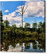 The Naked Tree Acrylic Print