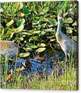 The New Family Acrylic Print by Lynda Dawson-Youngclaus
