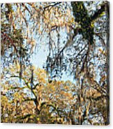 The Oaks Of City Park Acrylic Print