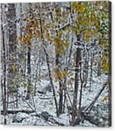 The October Blizzard Begins Acrylic Print