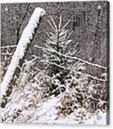 The Old Fence - Snowy Evergreen Acrylic Print
