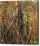 The Old Fence Post Acrylic Print