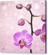The Orchid Tree - Texture Acrylic Print