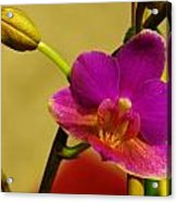 The Original Orchid Acrylic Print