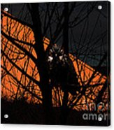 The Owl And The Old Ranch Acrylic Print