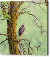 The Owls Overlook Acrylic Print