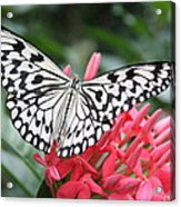 The Paper Kite Acrylic Print