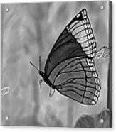 The Papillion Acrylic Print