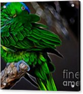 The Parrot Fractal Acrylic Print