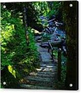 The Path To Iron Creek  Acrylic Print