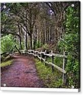 The Path To The Woods Acrylic Print