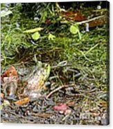 The Patient Frog Acrylic Print