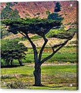 The Peace Tree Acrylic Print