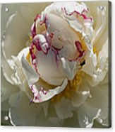 The Peony And The Ant Acrylic Print