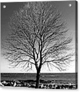 The Perfect Tree Acrylic Print