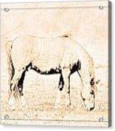 The Pony Acrylic Print
