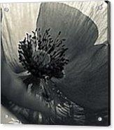 The Poppy Acrylic Print