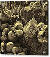 The Produce Of The Earth In Sepia Acrylic Print