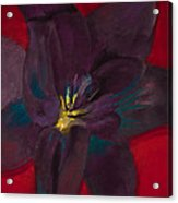 The Purple Lily Acrylic Print
