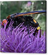 The Queen Acrylic Print by Eric Kempson