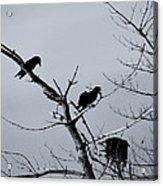 The Raven Tree Acrylic Print