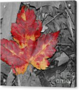 The Red Leaf Acrylic Print