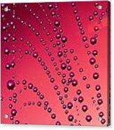 The Red Spiderweb Acrylic Print by Odon Czintos