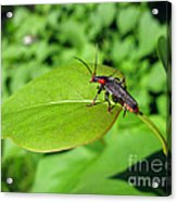 The Rednecked Bug On The Leaf Acrylic Print