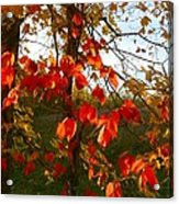 The Reds Of Autumn Acrylic Print by Julie Dant