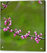 The Rite Of Spring Acrylic Print by Fraida Gutovich