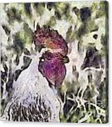 The Rooster Portrait Acrylic Print