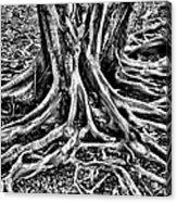 The Root Acrylic Print