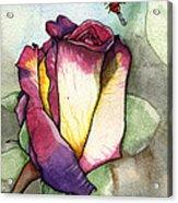 The Rose Acrylic Print by Nora Blansett