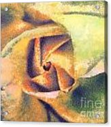 The Rose Acrylic Print by Odon Czintos