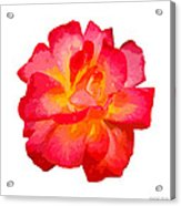 The Rose Patchwork Acrylic Print