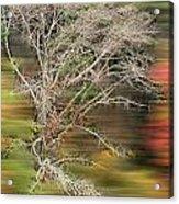 The Running Tree Acrylic Print