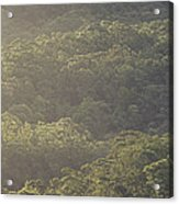 The Schlerophyll Forest Canopy Acrylic Print