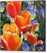 The Secret Life Of Tulips - 2 Acrylic Print