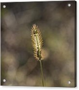 The Seeds Of Nature Acrylic Print